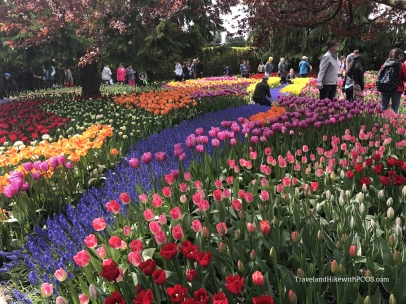 Skagit Valley Tulip Bloom Festival.  Colorful Tulips, Daffodils, Tulip Bulbs for sale. free catalog